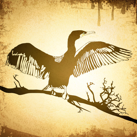 cormorant: Illustration of Hop off Cormorant Over Grunge Vintage Background Illustration