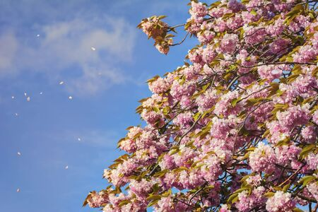 anthesis: Peach Flowers against Blue Sky Stock Photo