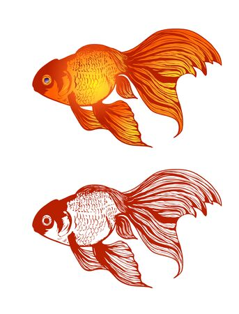 Illustration of Gold Fish Variations Over White Background