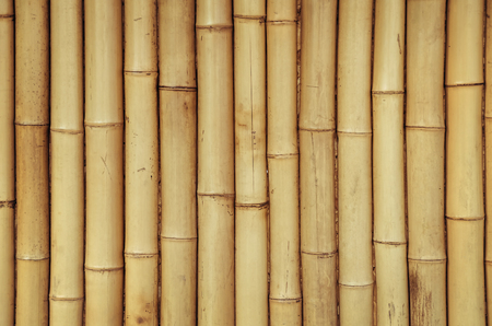 Contesto di bambù