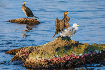 marine bird: Marine Birds on the Rocks in the Black Sea Stock Photo