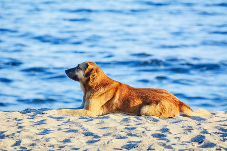 shore: Stray Dog on the Shore of the Black Sea