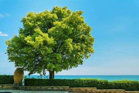 lush foliage: Tree with Lush Foliage against a Blue Sky Stock Photo