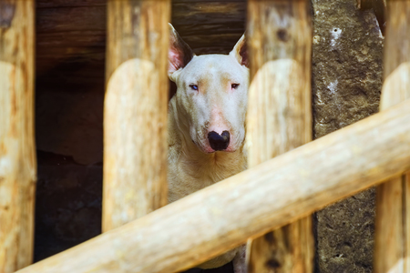 racy: Dog behind the Fence