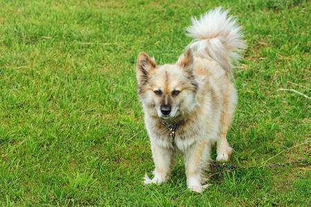 foreleg: Dog on the Grass
