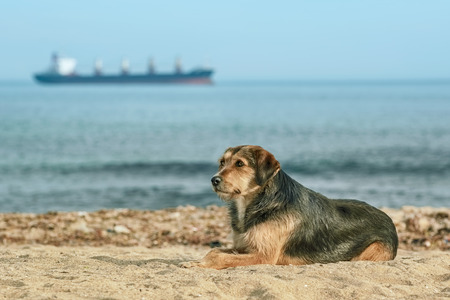 lop eared: Stray Dog on the Shore of the Black Sea