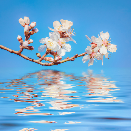 alycha: Spring Flowers over the Blue Background