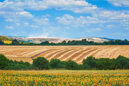 helianthus: Agricultural Fields near Devnya, Varna Province, Bulgaria Stock Photo