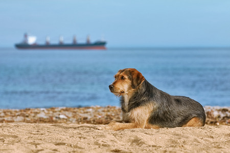 Mongrel Dog on the Shore in Front of View of Ship on Horizon