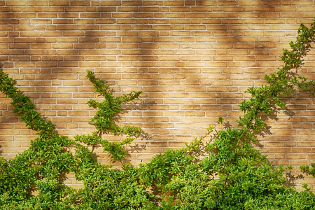 clambering: Green Clambering Plant over the Brick Wall