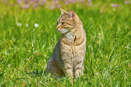 grassplot: Outbred Cat On The Green Grass Stock Photo
