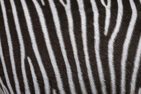 equid: Zerbra Black and White Striped Coat Background