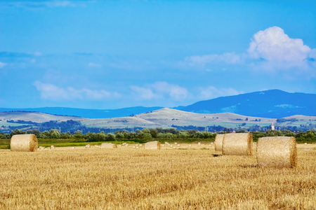 rick: Rural Landscape with Haystacks on the Field Stock Photo