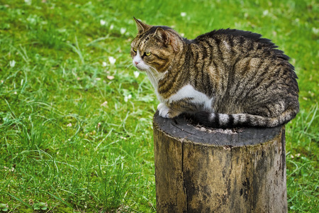 housecat: Alley Cat Resting on a Tree Stump