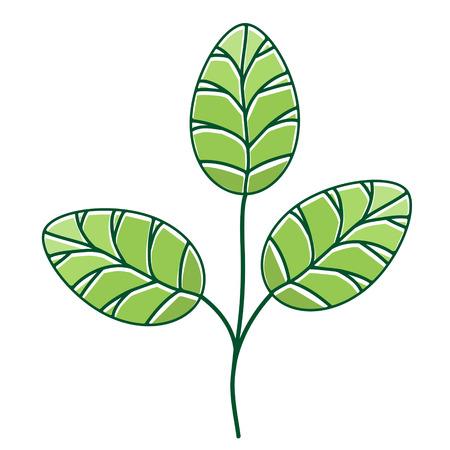 Illustration of Moringa Leaf Over White Background Illustration