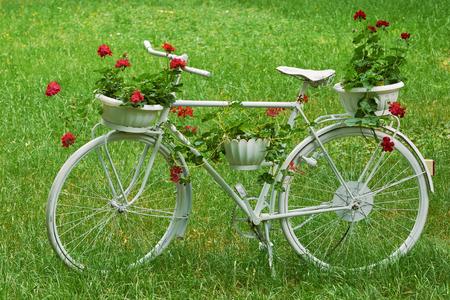 ecosistema: Blanca de la bicicleta retro con flores sobre la hierba