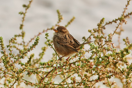 shrubbery: Sparrow Perched on the Shrubbery