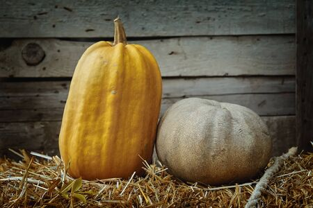 viands: Pumpkins on a Hay against the Wooden Background