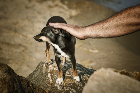 caresses: Man Caresses a Little Dog Stock Photo