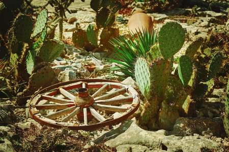 Old Wooden Wagon Wheel among Cacti