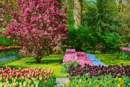 봄의 정원에서 튤립의 꽃 침대