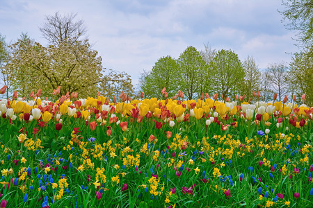 anthesis: Wall of Different Kinds of Flowers Including Tulips