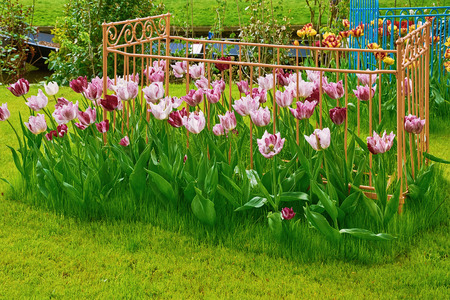 anthesis: Flower Bed with Tulips on the Grass