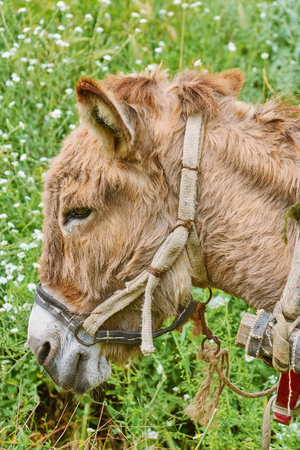 Portrait of Donkey against of Green Grass