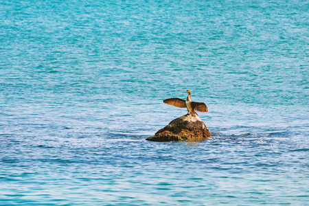 wingspread: Cormorant Dries Wings while Sitting on a Stone in the Black Sea