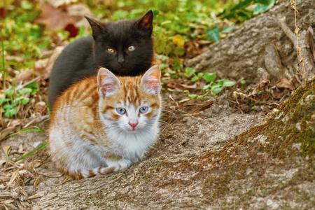 moggy: Portrait of Two Little Kittens near the Tree