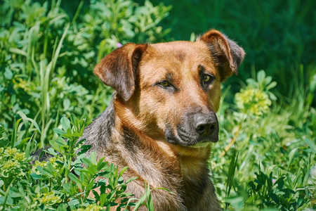 Portrait of Sstreet Dog among the Grass Stock Photo