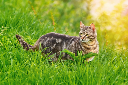 moggy: Mongrel Cat in the Green Grass