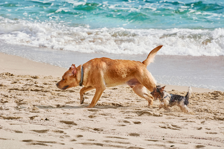 played: Big and Small Dogs Played on a Beach