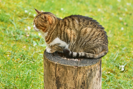 moggy: Alley Cat Resting on a Tree Stump