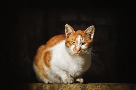 Stray Cat over the Dark Background