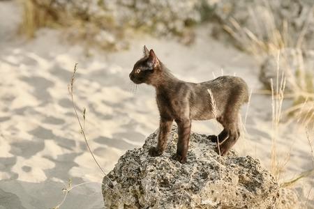 moggy: Little Black Kitten