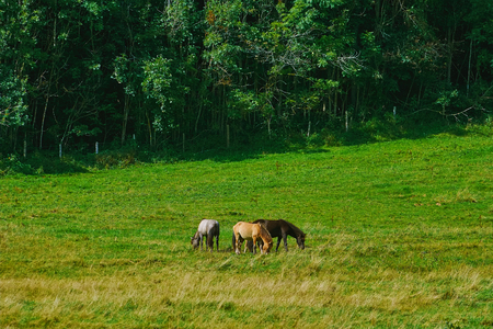 Three Horses in the Pasture near a Forest Stock Photo