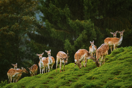 Deers on the Slope of a Hill near the Forest