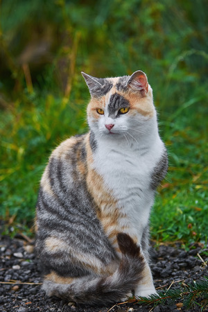 moggy: Domestic Cat Sitting on the Gravel Road Stock Photo