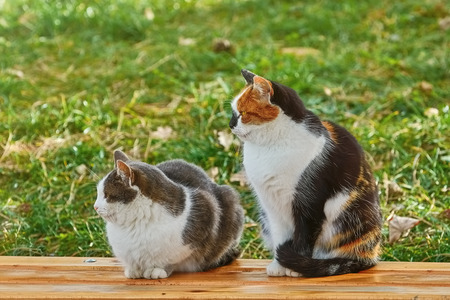 Two Cats Sitting on the Wooden Bench