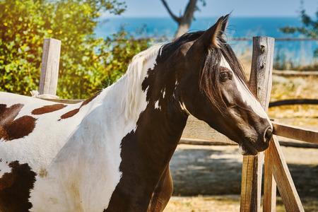 Portrait of Black and White Horse 版權商用圖片