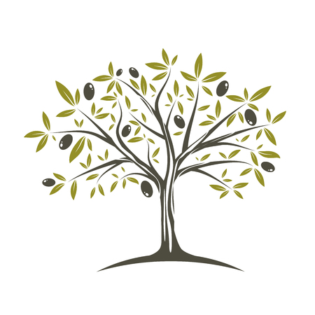 Illustration de l'olivier unique en couleurs plates