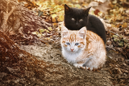 Portrait of Two Little Kittens near the Tree