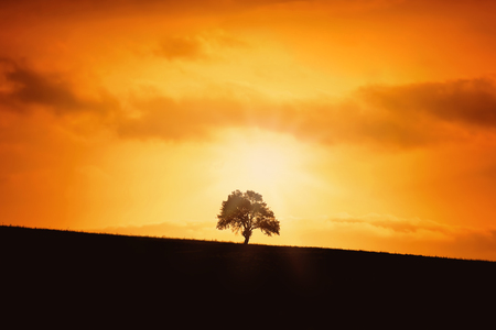 Silhouette of a Tree on a Slope Stok Fotoğraf