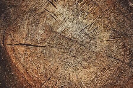 Cross Section of the Tree. Abstract Wooden Background