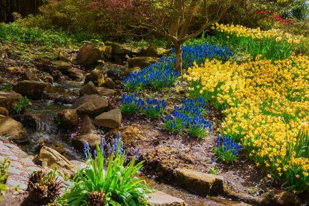 Flowerbed with different types of flowers in the park