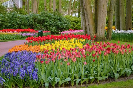 Spring in the park. Lisse, the Netherlands.
