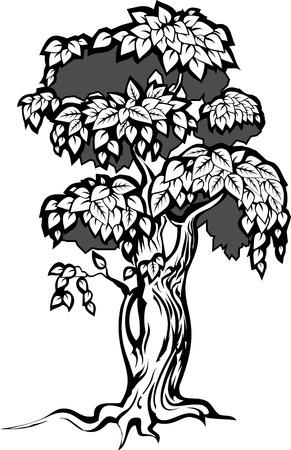 Tree with lush foliage Vector illustration.