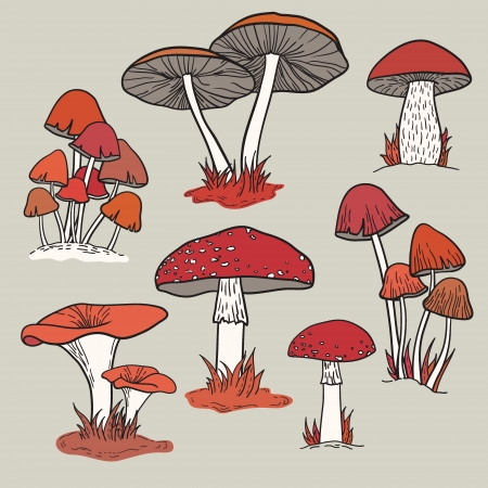 Vector set with mushrooms Stock Vector - 23648169
