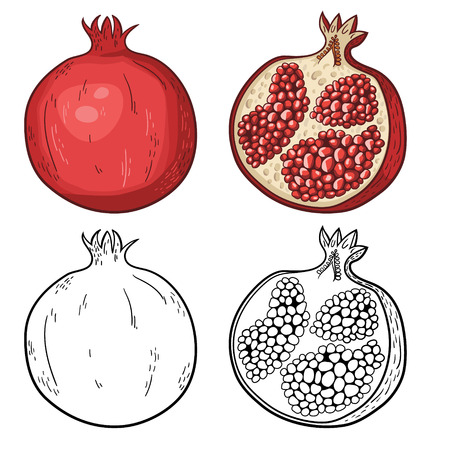 Natural organic sweet cut and sliced pomegranate and seeds tropical fruit decorative poster or emblem isolated vector illustration  Black and white and colorful Vector